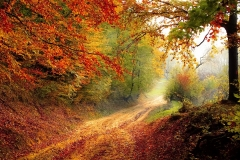 Autumn road-