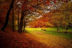 autumn-
