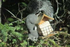 squirrel-Bird Seed
