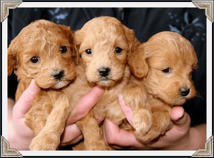 puppies first shots