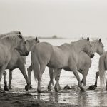 Horse Gallery a Herd of Beauty