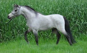 Miniature Horse Tack The Best for your Horse.