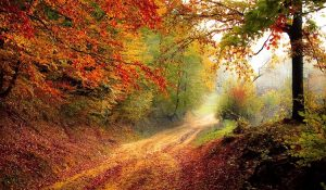 Fall of the Year or Autumn