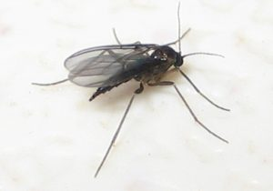 How to Kill Gnats Fast, Get the latest Info Here!