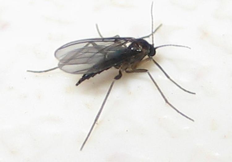Kill Gnats Fast