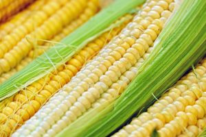 How to Boil Corn on the Cob and other Methods